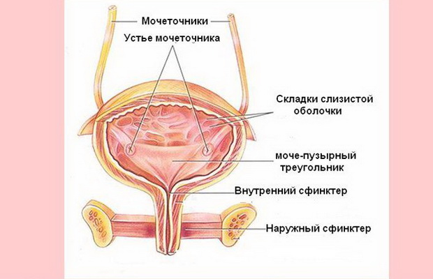 сфинктер фото у женщин