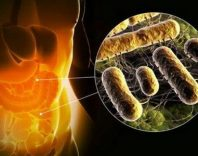 Дисбактериоз кишечника: причины, классификация и диагностика