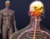 Заболевания вегетативной нервной системы: симптомы и терапия