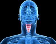 Анатомия щитовидной железы. Пальпация изменений структуры